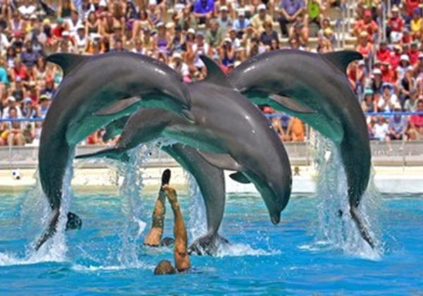 Dolphin Show 1